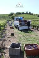 Débardage et transport des caisses à raisins - Champagne Demière.