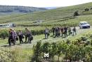 Changement de vigne - Champagne Demière.