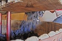 Remplissage du pressoir traditionnel - Champagne Demière.