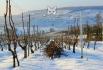 2013, Damery. Pour prendre un bon cliché enneigé en Champagne, il faut s'armer de patience tellement la neige est devenue rare ! Début 2013, nous avons eu plusieurs épisodes neigeux, dont celui de ce 16 janvier, où je suis montée en après-ski sur un coteau de mon village, exposé au doux soleil des 16 heures. Les couleurs froides de la neige et chaudes du soleil se mélangent pour donner la magie de ces ambiances rares.