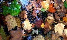 feuilles-dautomne-carine-charlier-1-web