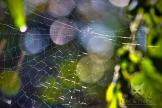 Toile d'araignée dans la lumière