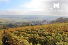 2015, Fleury-La –Rivière. Cette photographie se classe dans les « photo-peintures » Il s'agit du vignoble fleurisien figé en octobre, plongeant tel une mer de vigne sous le village. Les couleurs sont vives et douces à la fois.