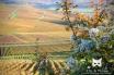 2013, Fleury-La-Rivière. Un soir d'automne de novembre, alors que les couleurs chaudes étaient majoritaires, j'ai voulu mettre en avant la Clématite des haies (Clematis vitalba), plante grimpante insignifiante à la belle saison, mais qui ajoute une note poétique à nos hivers par son aspect pur, plumeux, duveteux, accrochant bien la lumière. Le panorama flouté et doré en fond tranche avec la plante, encore nommé « vigne-blanche », « Aubervigne », « Bois à fumer », « Bois de pipe », « Cranquillier », « Herbe aux gueux », « Vigne de Salomon » ou encore « Viorne des pauvres ».