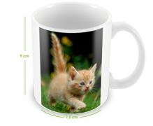 Mug-photo