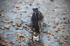 © Carine Charlier / clic & plume