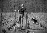 Stéphanie et Pierrot des Galipes Prestations Viticoles à Oger, en train de lier les vignes.