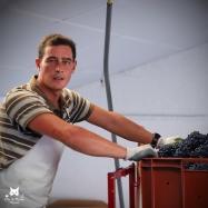 Chargement des raisins dans le pressoir - Champagne Robert Allait de Villers sous Châtillon.