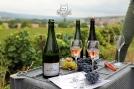 Dégustation pendant les vendanges du Champagne Piot-Sévillano à Vincelles