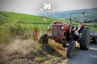 Ancien tracteur toujours utilisé pour les vendanges, Champagne Ridoux-Cousin à Arty.