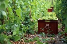 Chardonnay de Chouilly - Champagne Lancelot-Goussard