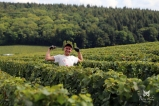 Vendangeur - Champagne Arthur Marc à Fleury-La-Rivière.