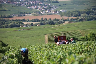 Débardage - Champagne Clément à Reuil.
