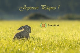 hare-983940_1280 copie
